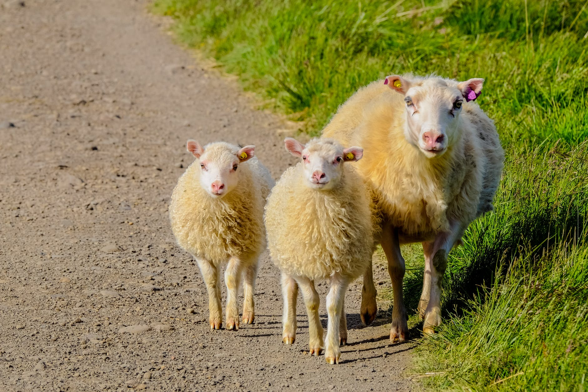 animal animal photography countryside cute